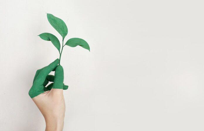Saadan-indretter-du-bæredygtigt